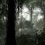 Survive The Rainforest