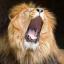 Lion Sphinx